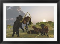 Framed pack of Saber Tooth Cats attack a small Woolly Mammoth