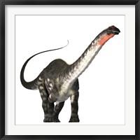 Framed Apatosaurus dinosaur was a herbivore of the Jurassic Era