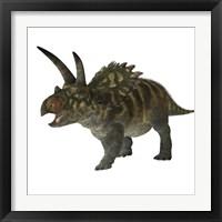Framed Coahuilaceratops dinosaur