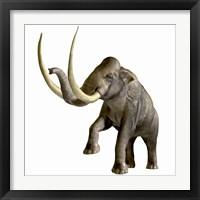 Framed Columbian Mammoth