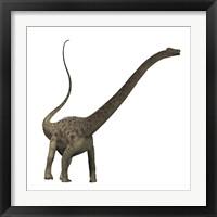 Framed Diplodocus dinosaur