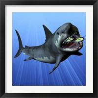 Framed Cenozoic Era Megalodon devours two swimming tuna