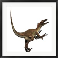 Framed Artist's concept of a Utahraptor