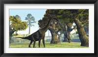 Framed Brachiosaurus dinosaurs walk among large trees in the prehistoric era