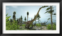 Framed herd of Diplodocus dinosaurs graze on trees