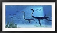Framed Plesiosaurus dinosaurs swimming the Jurassic seas