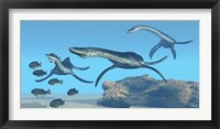 Framed Plesiosaurus dinosaurs hunt a school of Dapedius fish