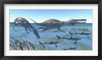Framed Two Suchomimus dinosaurs hunting small sharks