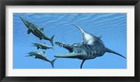 Liopleurodon reptile hunting Ichthyosaurus dinosaurs in Jurassic seas Framed Print