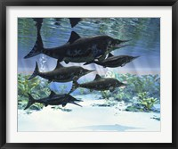Framed group of Ichthyosaurs swimming in prehistoric waters
