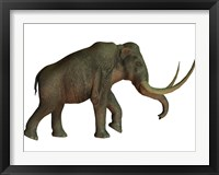 Framed Columbian mammoth, an extinct species of elephant