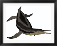 Framed Dolichorhynchops, an extinct genus of short-neck Plesiosaur