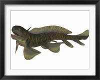 Framed Xenacanthus, a Devonian freshwater shark