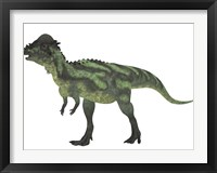 Framed Pachycephalosaurus, a biped dinosaur from the Cretaceous Period