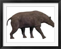 Framed Paraceratherium, an extinct rhinoceros-like mammal