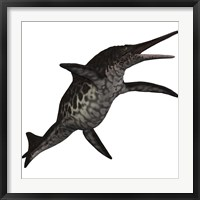 Framed Shonisaurus, a prehistoric ichthyosaur from the Triassic period