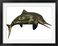 Framed Stenopterygius was an ichthyosaur from the Jurassic Period