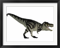 Framed Tyranosaurus Rex, a large carnivore of the Cretaceous Period