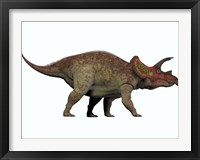Framed Triceratops, a herbivorous dinosaur from the Cretaceous Period