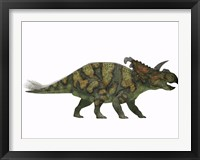Framed Albertaceratops dinosaur from the Upper Cretaceous Era