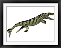 Framed Dakosaurus, white background