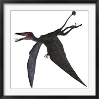 Framed Dorygnathus, a genus of pterosaur from the Jurassic Period