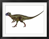 Framed Hypsilophodon is an ornithopod dinosaur from the Cretaceous Period