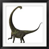 Framed Mamenchisaurus, a plant-eating sauropod dinosaur