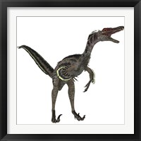 Framed Velociraptor, a theropod dinosaur from the late Cretaceous Period