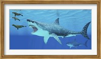 Framed Seals race to get away from a giant Megalodon shark