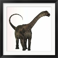 Framed Antarctosaurus dinosaur from the Cretaceous Period