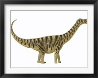 Camarasaurus was a sauropod dinosaur that lived during the Jurassic Age Framed Print