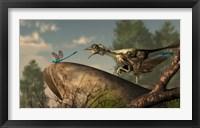 Framed Archaeopteryx stalks a dragonfly on a rock
