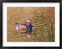 Framed Mandarin Duck, Beijing, China