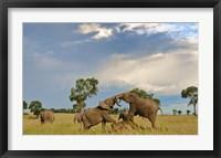 Framed Kenya, Maasai Mara National Park, Young elephants