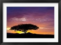 Framed Kenya, Masai Mara. Sunrise silhouette, acacia tree