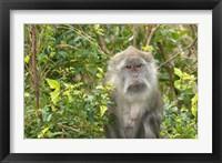 Framed Mauritius, Grand Bassin, Macaque monkey, Hindu site
