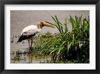 Framed Kenya. Masai Mara, Yellowbilled stork bird