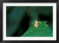 Framed Insect on Green Leaf, Gombe National Park, Tanzania