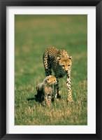 Framed Kenya, Masai Mara Game Reserve, Cheetah with cub