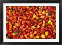 Framed Hot Red Pepper at the Local Market, Madagascar