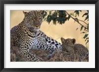 Framed Leopard and Cub Resting, Masai Mara Game Reserve, Kenya