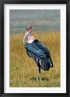 Framed Marabou Stork, Kenya