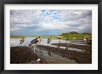 Framed Marabou Storks, fish market in Awasa, Ethiopia