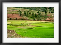 Framed People working in green rice fields, Madagascar