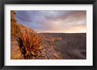 Framed Namibia, Fish River Canyon National Park, desert plant