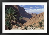 Framed Palm Trees and Creekbed Below Limestone Cliffs, Morocco