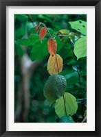 Framed Rainy Season Vegetation, Gombe National Park, Tanzania