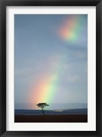 Framed Rainbow Forms Amid Rain Clouds, Masai Mara Game Reserve, Kenya