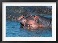 Framed Mother and Young Hippopotamus, Serengeti, Tanzania